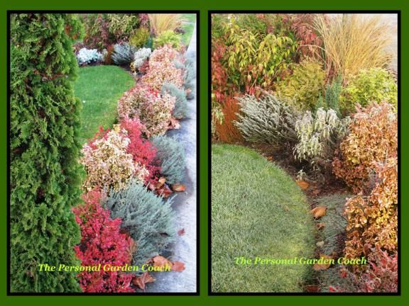 Inexpensive Landscaping Shrubs : Garden designer s roundtable deer vs gardener inexpensive landscaping
