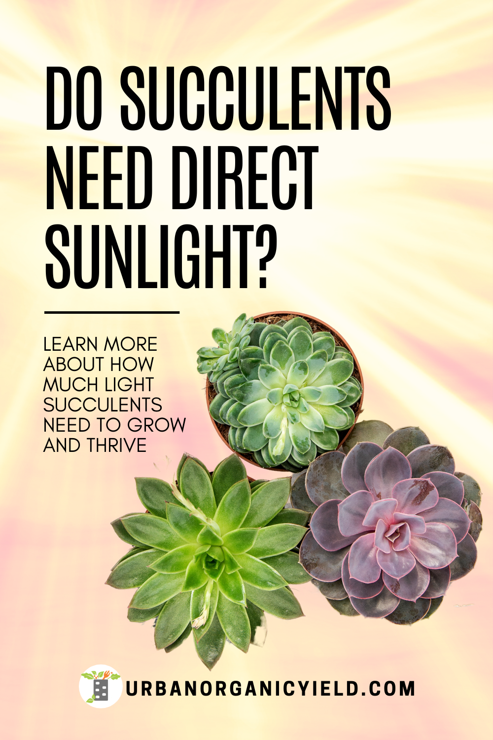 How Much Sun Do Succulents Need In 2020 Succulents Jade Plants Succulent Outdoor