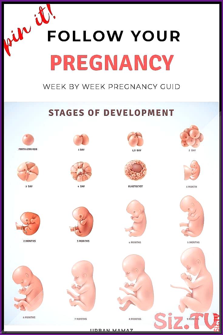 By pregnancy week week Pregnancy Calendar: