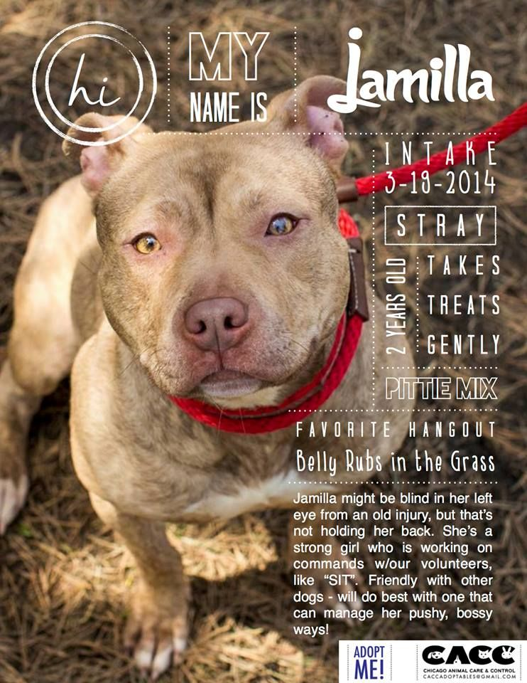 Chicago Please Foster Support Your Shelter Animals