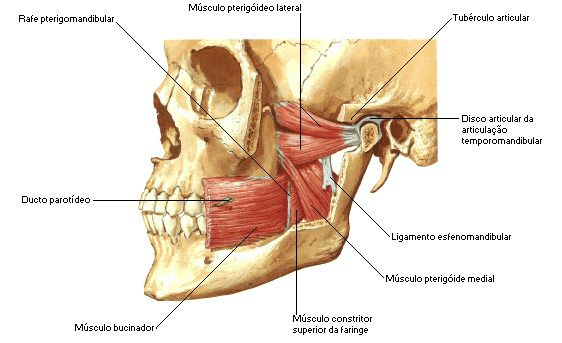 Pin de Gift Сards Аmazоn en Mag | Pinterest | Anatomía, Odontología ...