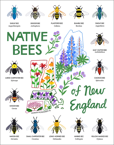 Native Bees Of New England 11x14 Print Native Bees Types Of Bees New England