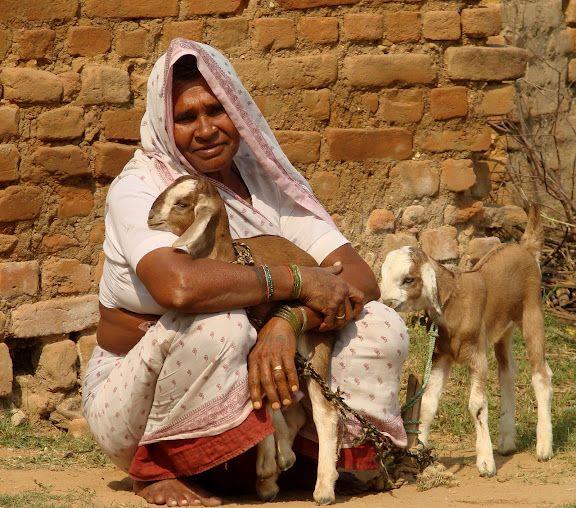 Khajuraho Goats