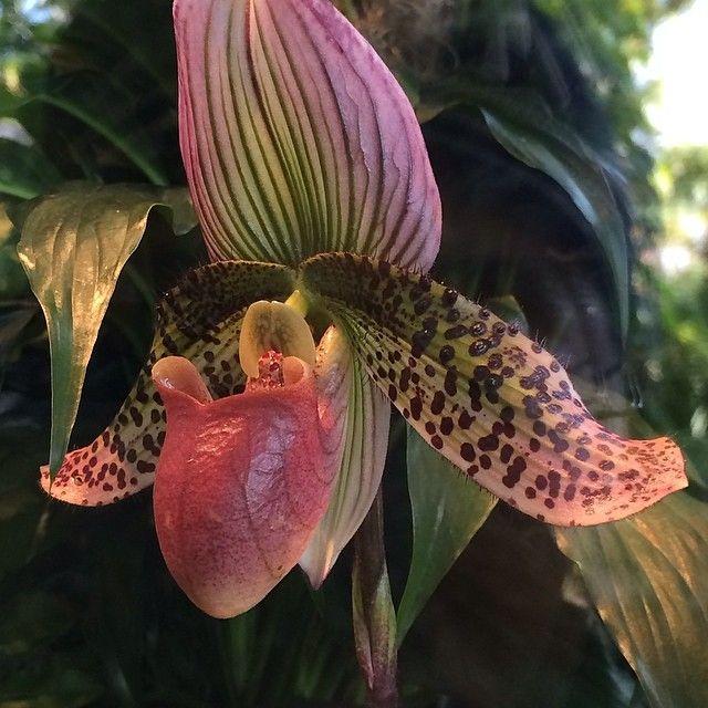 #orchidnybg Instagram photos | Webstagram