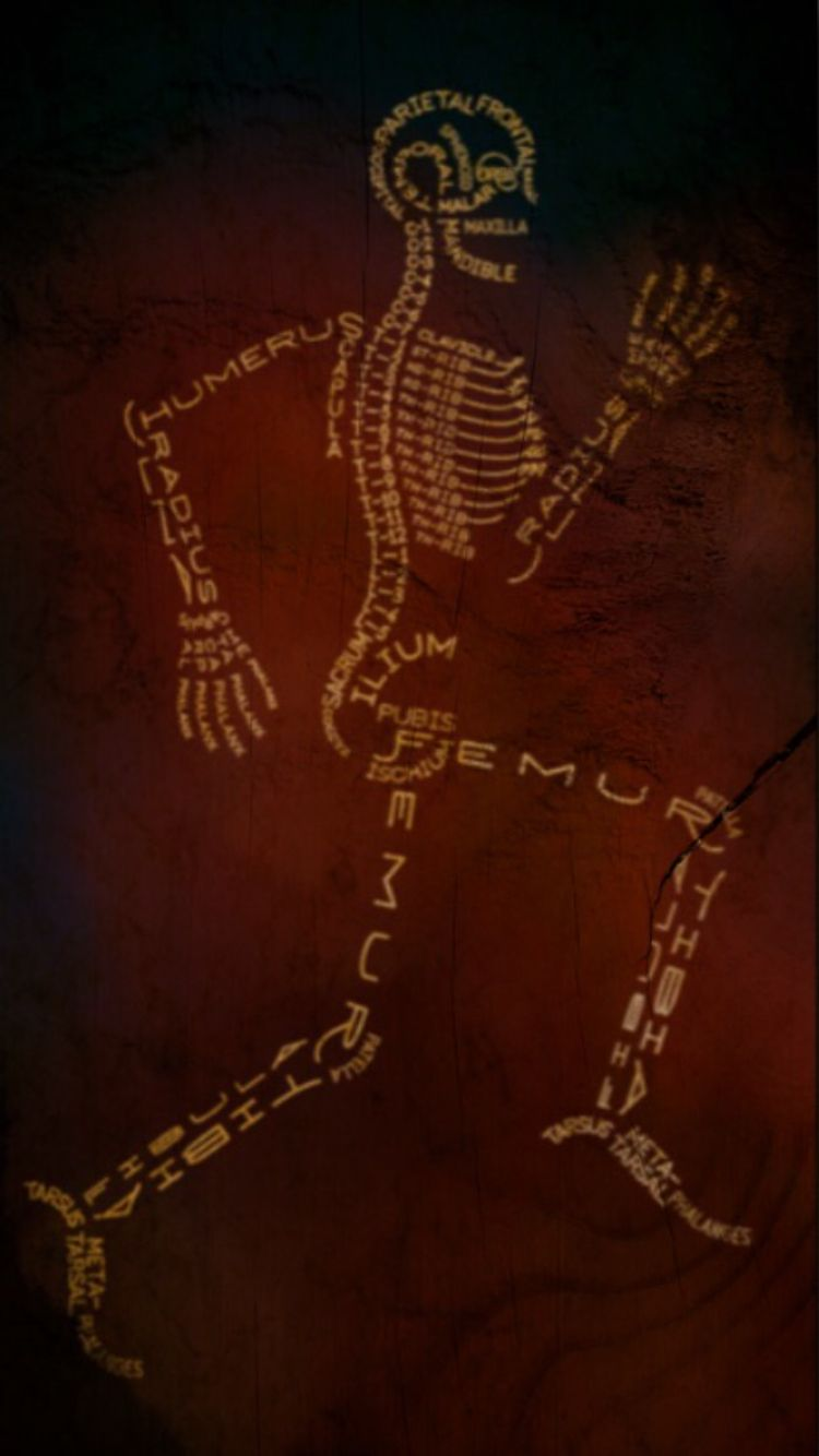 Skeleton Made Of Names Of Bones Sports Med Pinterest Skeletons