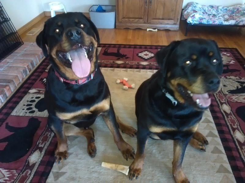 Rottweiler Puppies Nc Adoption References