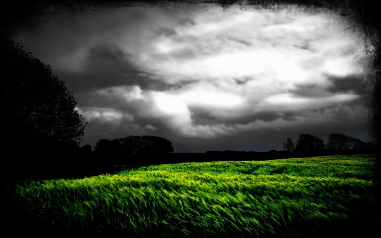 e08eb859c2c9c 1280x800 Dark Sky Trees & Grass Field desktop PC and Mac wallpaper ...