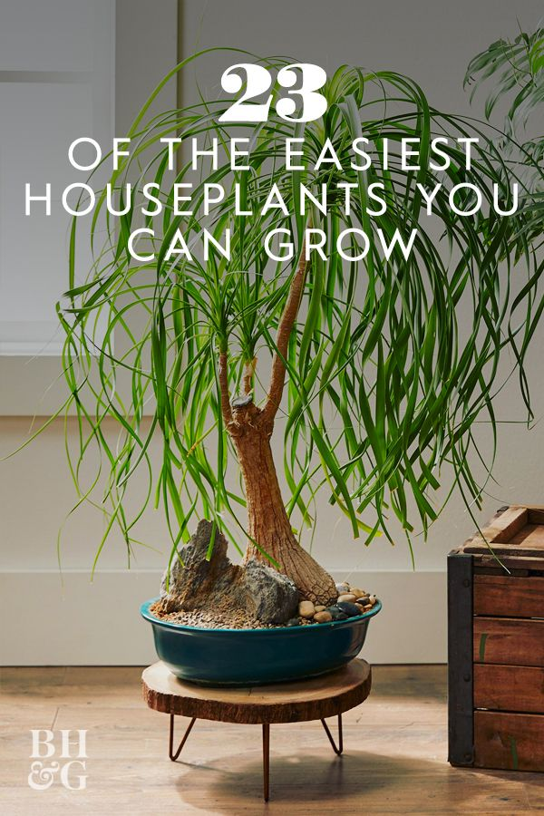 23 of the Easiest Houseplants You Can Grow is part of Potted plants patio, Inside plants, Plants, Houseplants, Easy care plants, Easy plants - These lowmaintenance houseplants add lushness and color to any home without needing much from you other than an occasional watering