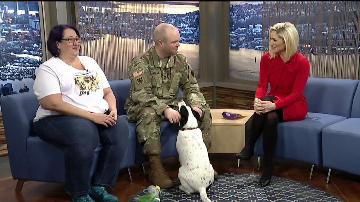Local Soldier Needs Foster Home For His Dog The Fosters Maternity Insurance Soldier