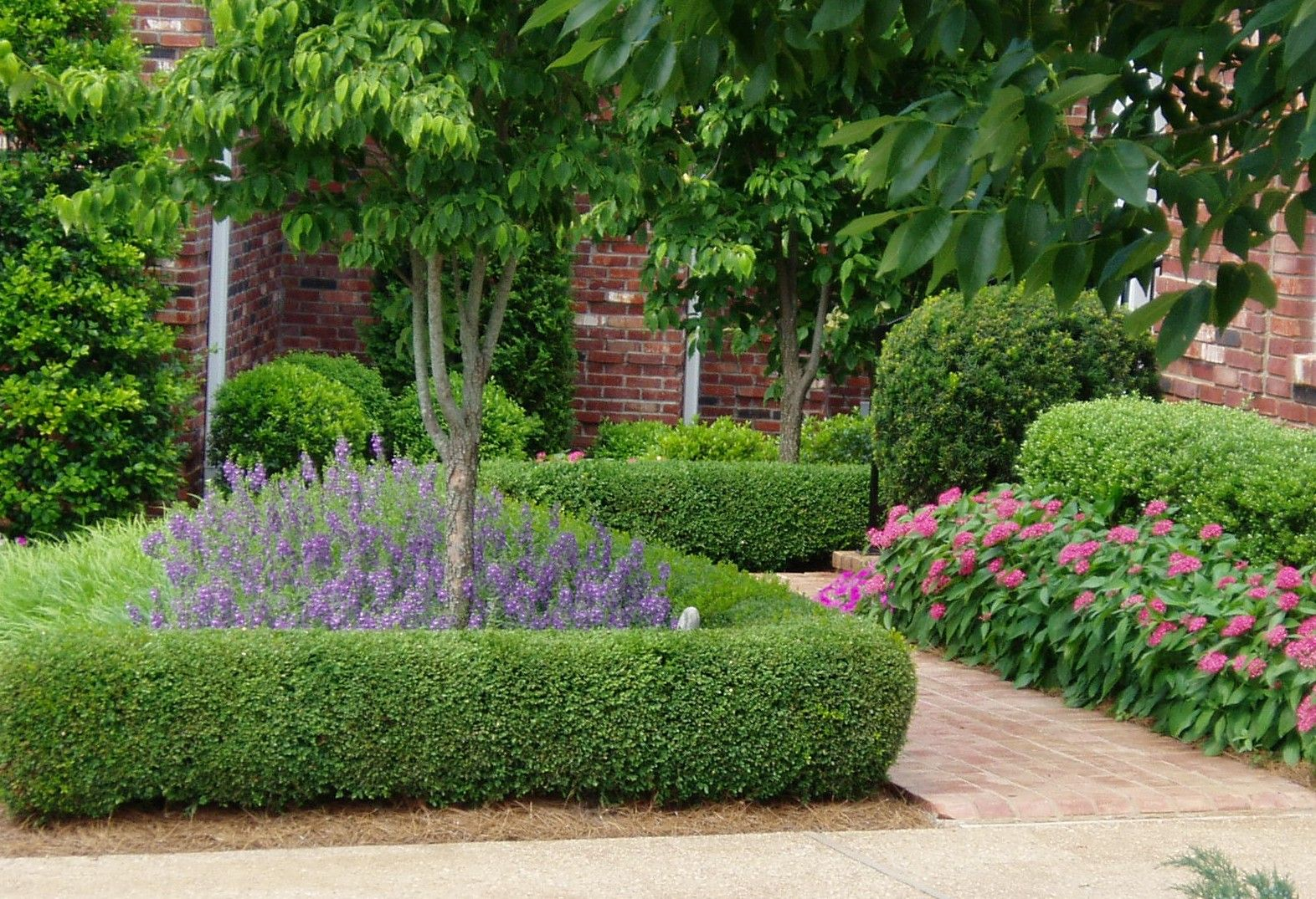 Dwarf english boxwood home garden pinterest english for Garden hedge designs