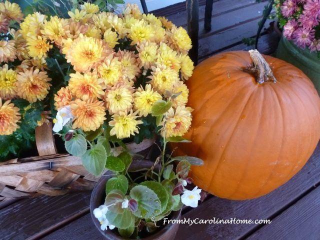 Late November veranda 1