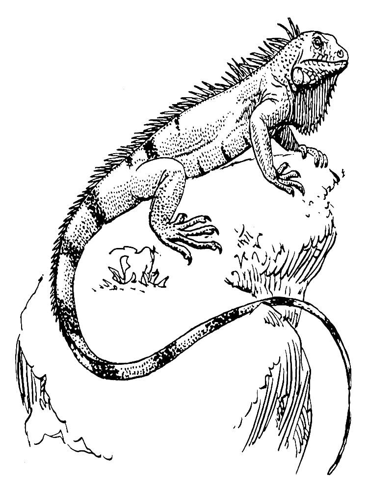 Reptiliendrucken Coloring Reptiles Keeping Iguana Longer Print Pages Is No N Print Iguana Coloring Pages Keep Iguana Animal Coloring Pages Reptiles