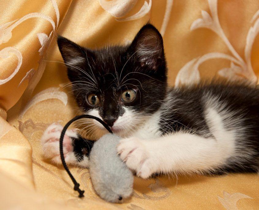 7 Moglichkeiten Ihre Katze In Der Stadt Zu Unterhalten Und Sicher Zu Halten Alles Haustier Katzen Katzen Draussen Haustier