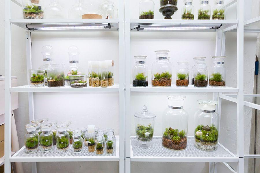 苔のテラリウムを作る 1ボトルの中で完結する小さな緑の世界 苔
