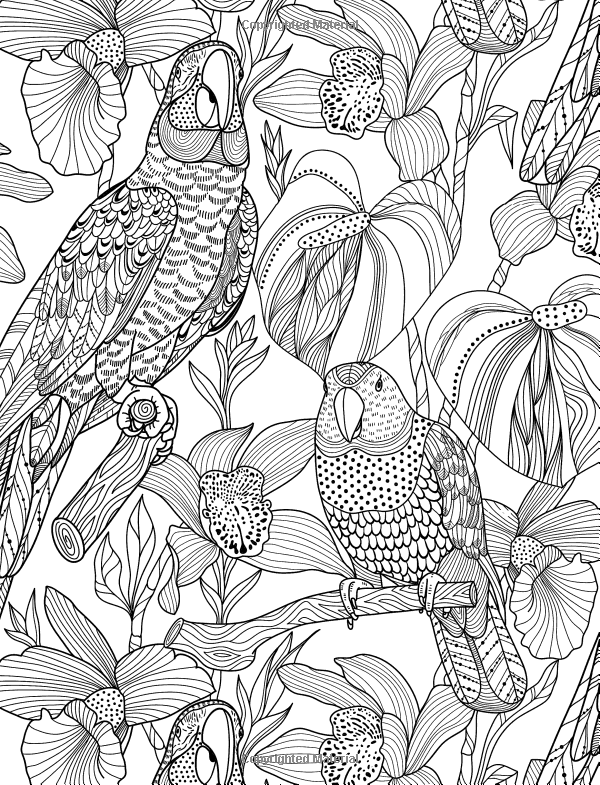 Coloriage coloriage perroquet pinterest coloriage - Dessins de perroquets ...