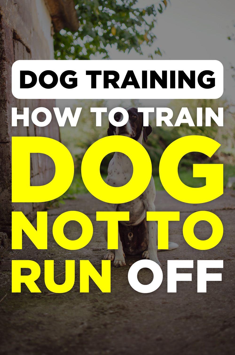 Brain Training For Dogs Review Dog Training Treats Brain