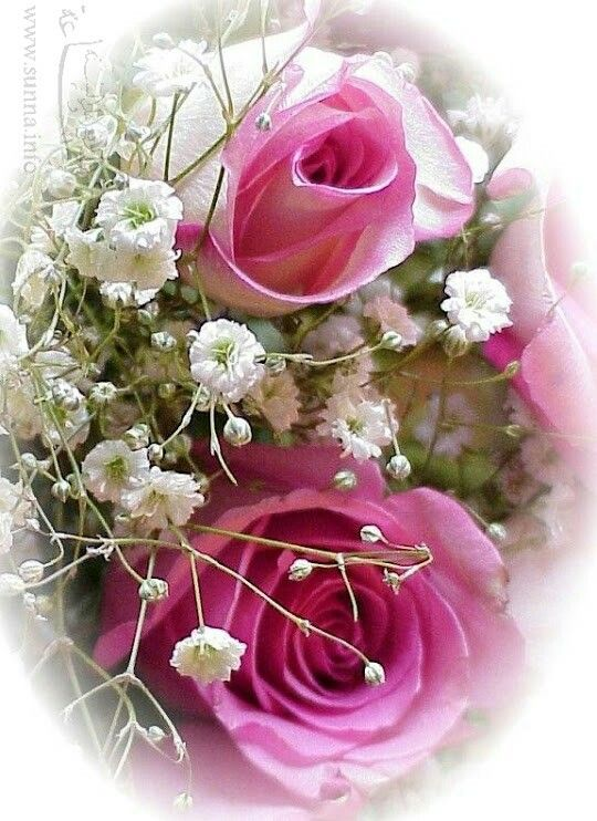 Pin By نزيهة بودريسة On عالم الورود Flowers Plants Rose