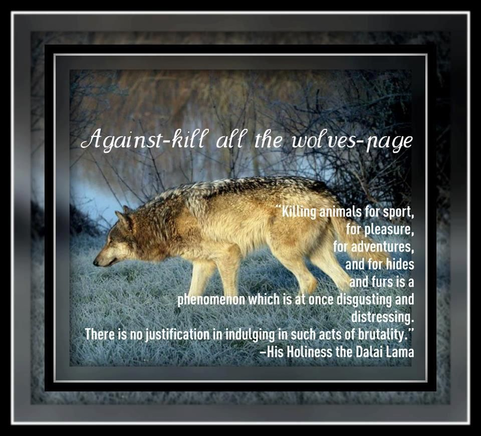 Don't shoot the wolves - dalai lama quote | Wolves | Wolf