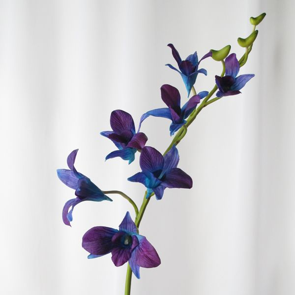 Real Touch Blue Purple Singapore Orchid Bluesingaporeorchid Bluegalaxyorchid Artificialgalaxyorchid Blues Phalaenopsis Orchid Orchids Dendrobium Orchids