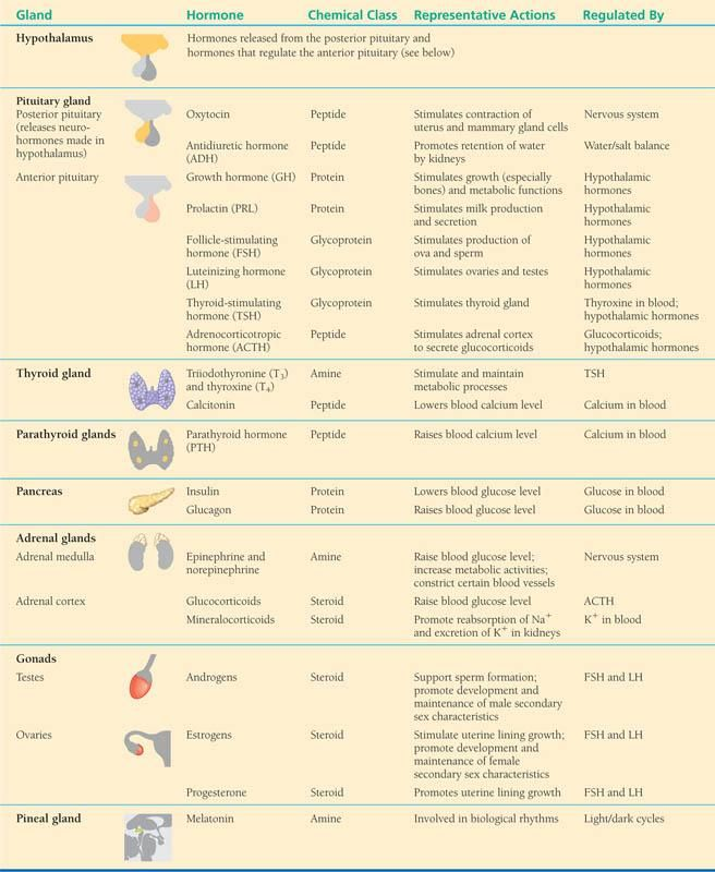 Endocrine System Hormone Chart Ibovnathandedecker