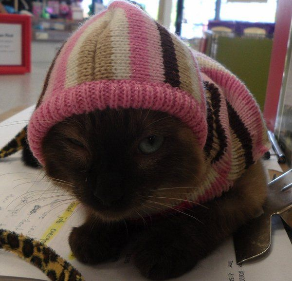 Modern fashion for cats