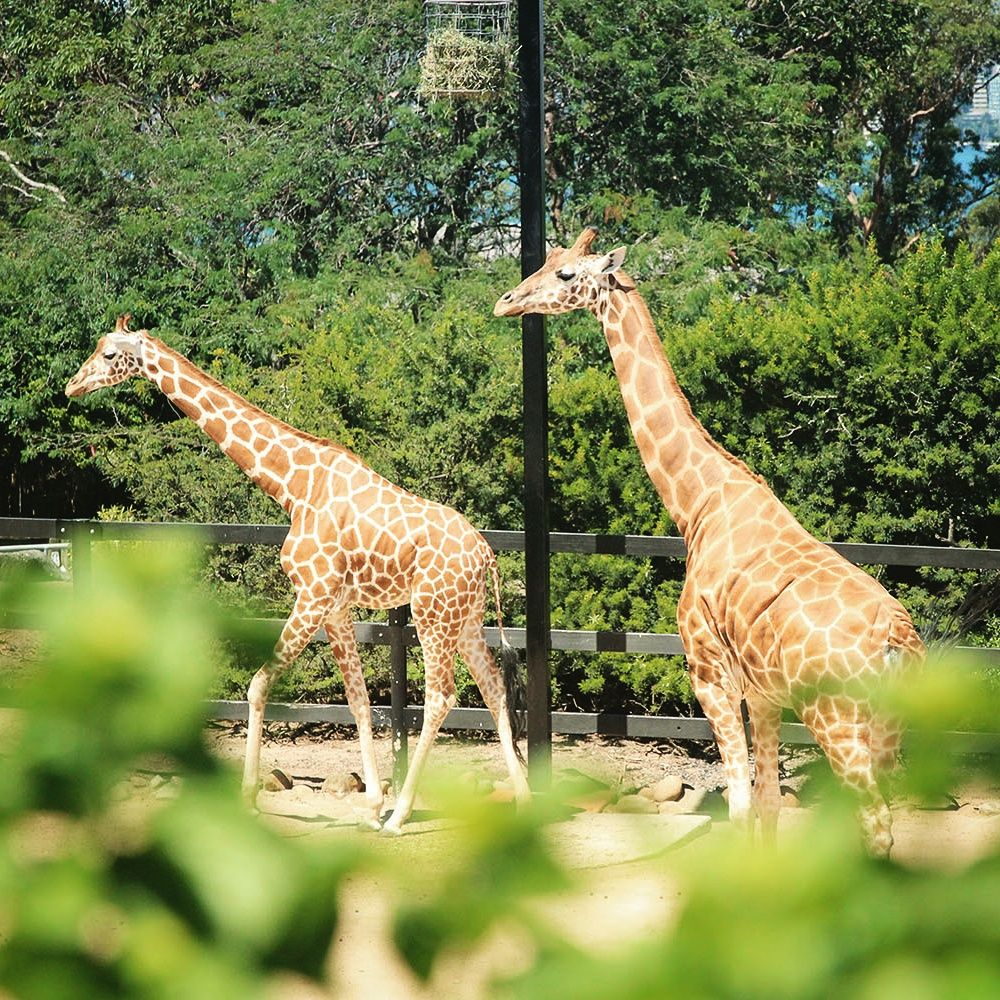 Is Taronga Zoo Worth The Crazy Admission Price A Globe Well Travelled Beautiful Places To Visit Australia Backpacking Places To Visit