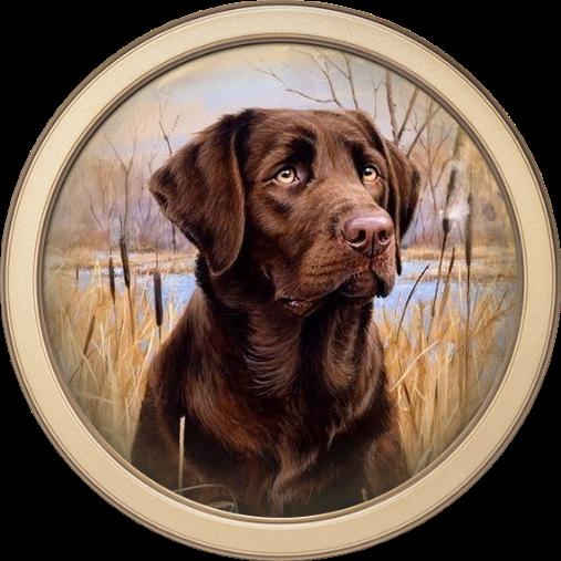 тоже круглые картинки собак муж