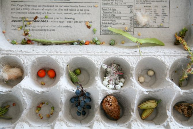 This is a wonderful DAP lesson plan created by a teacher to show students how seeds travel and move. What a wonderful plan. It has outdoor time, a book to read, sorting, this plan has it all!