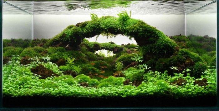 Perspective Rock Bridge With Low Height Aqua Plants Aquascaping Idea.  Aquascaping,
