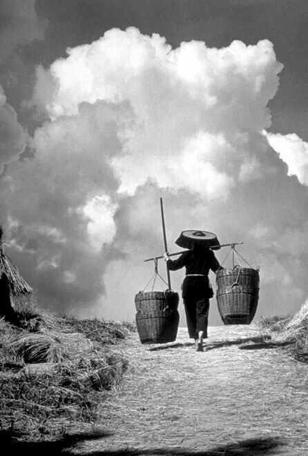 Francis Wu Harvest Summer