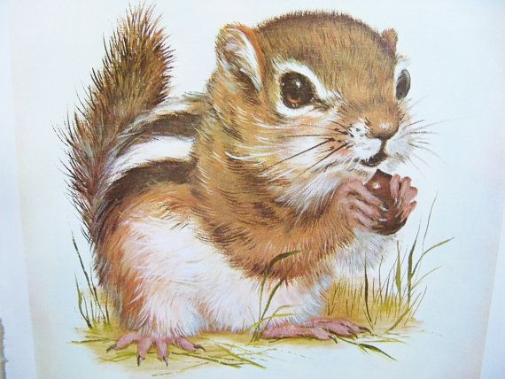 Baby Chipmunk Animal Print Chipmunk Print Vintage