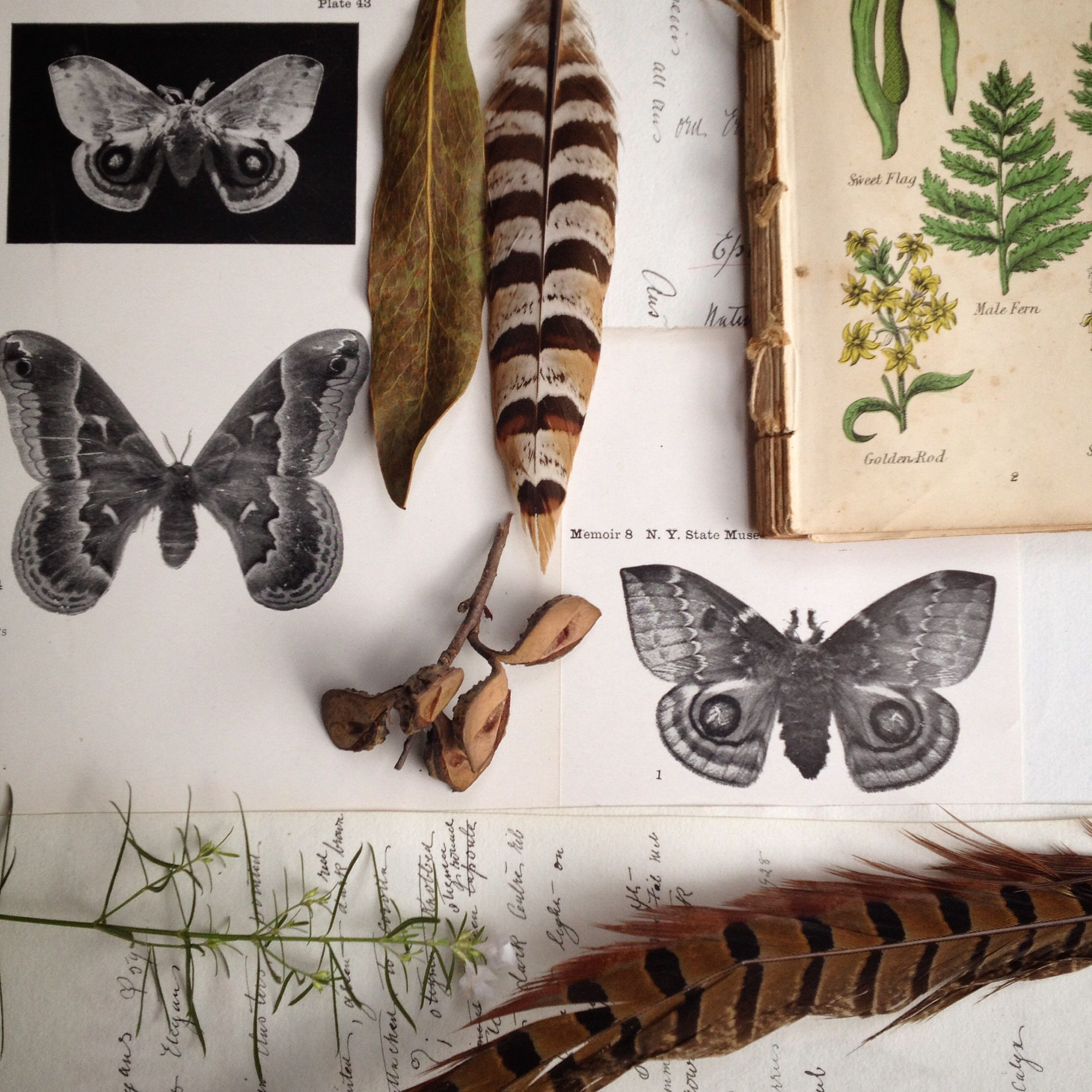Moths In Kitchen Cabinets: The Naturalist Melbourne