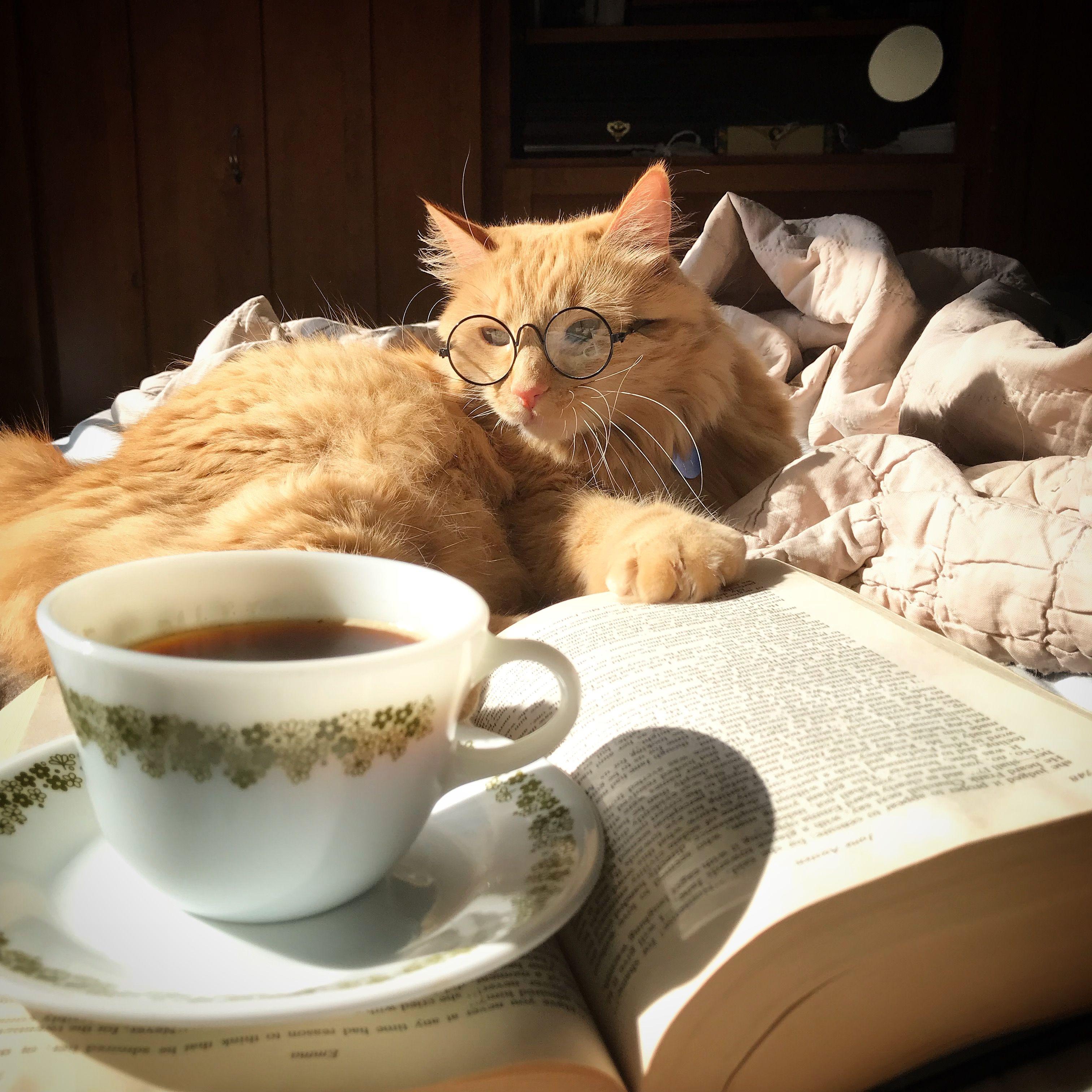 доброе утро с кофе и котиком картинки подходит концу