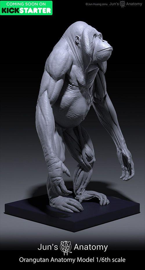 ArtStation - Orangutan anatomy model 1/6th scale, Jun Huang | Animal ...