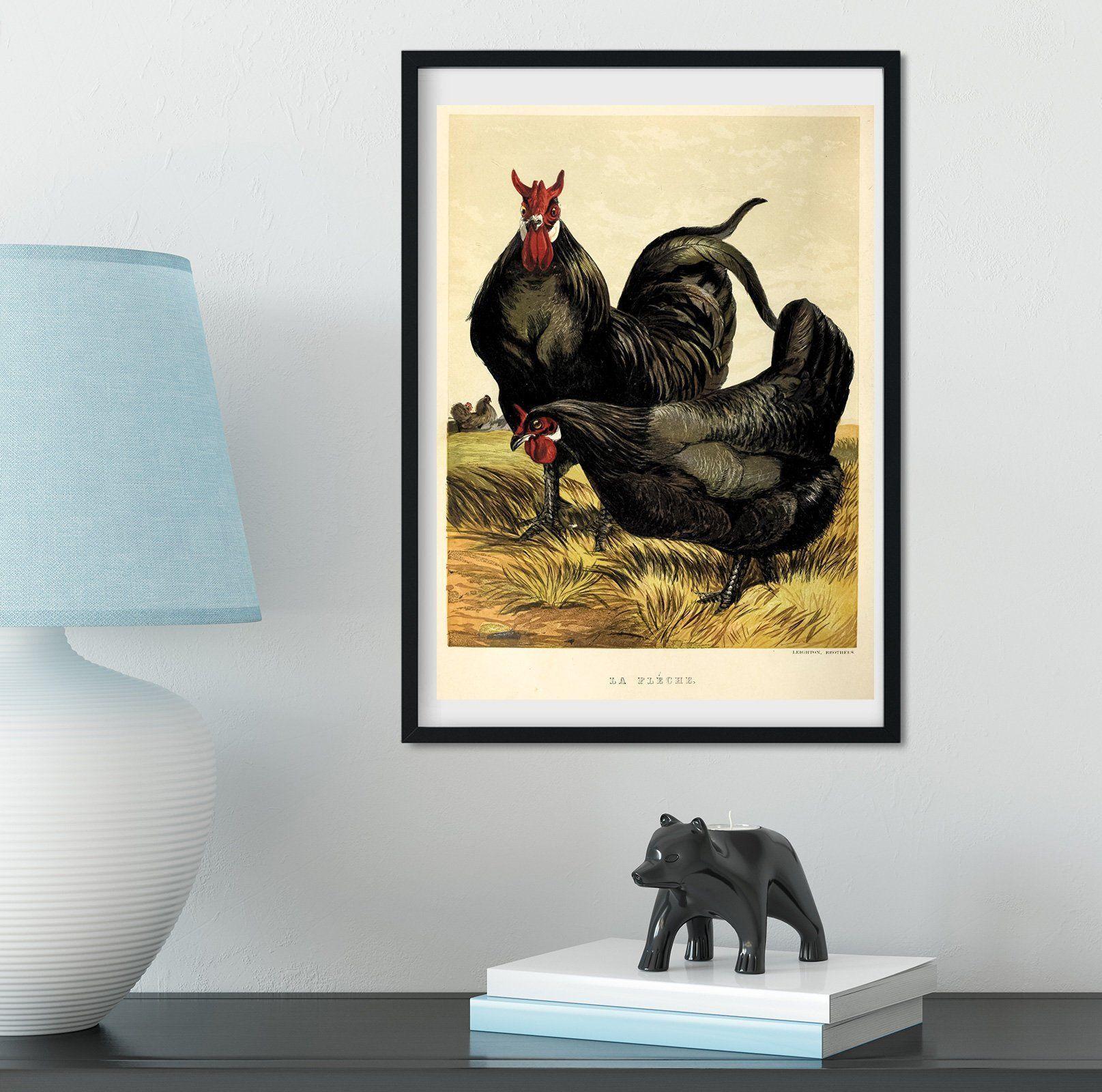 Framed vintage chicken print natural history chicken art