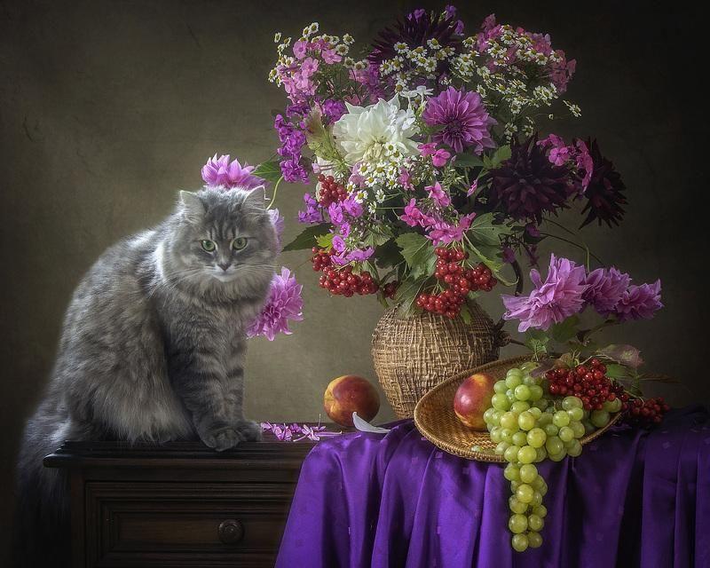картинки фотонатюрморты с кошками ле-цион приглашает всех