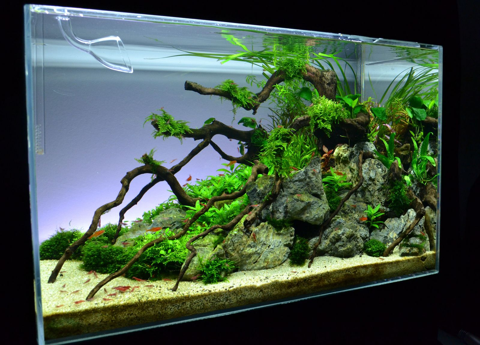 1000  images about aquarium on pinterest