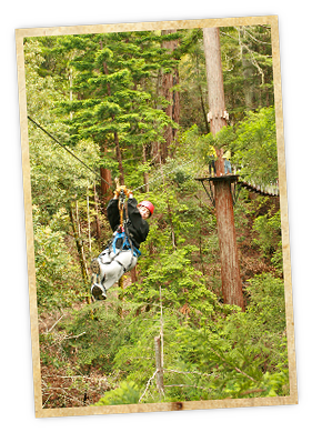 Zip through the Redwood forest canopy with Sonoma Canopy Tours in Occidental Sonoma County  sc 1 st  Pinterest & Zip through the Redwood forest canopy with Sonoma Canopy Tours in ...