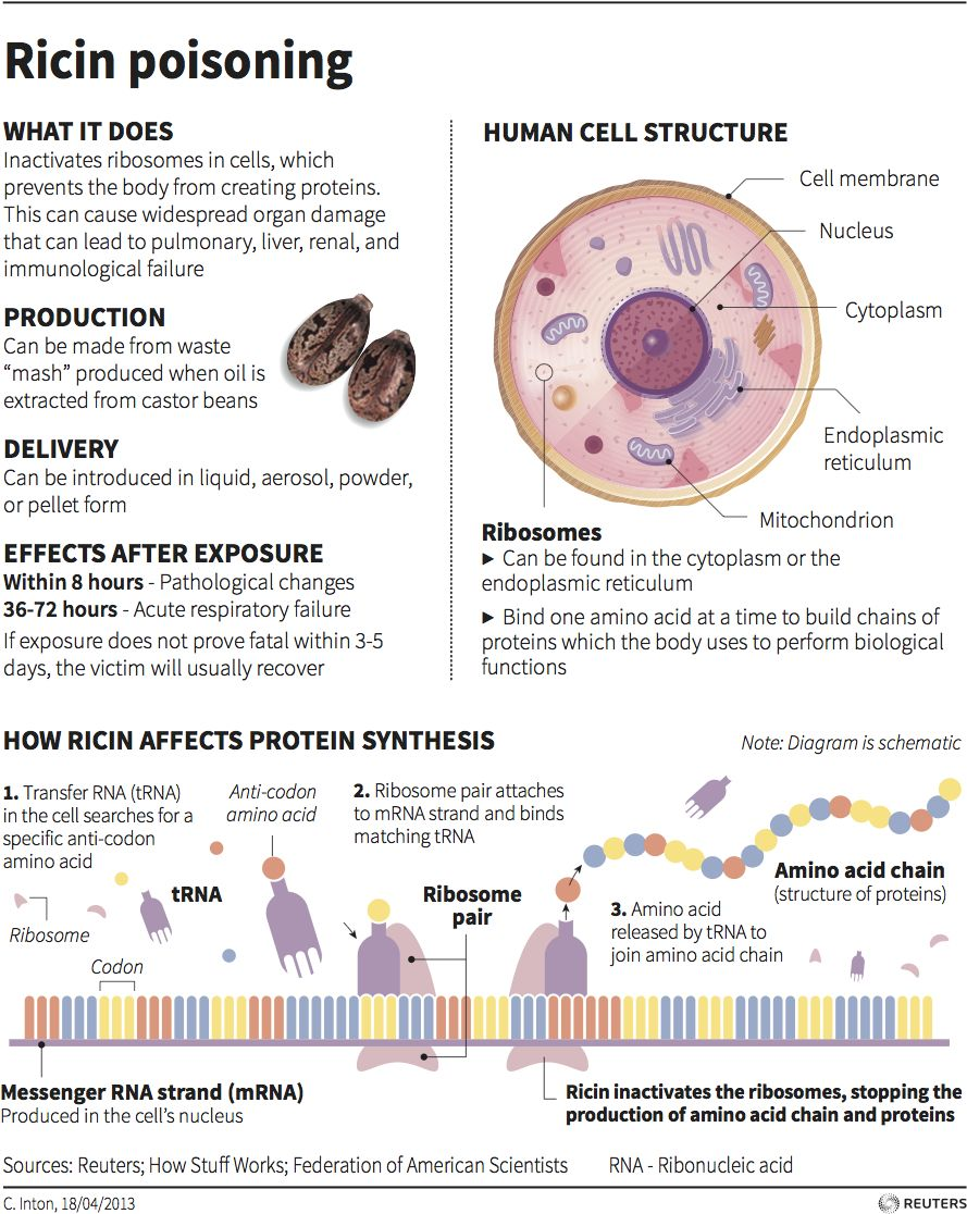 Ricin Poisoning Graphic Of The Day Thomson Reuters Blog Human Cell Structure Cell Membrane Prevention