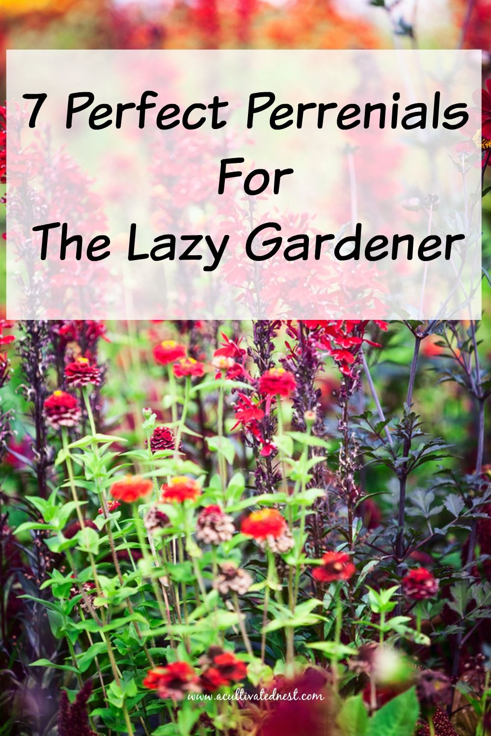 7 Perfect Perennials for the Lazy Gardener is part of Outdoor plants, Perennial garden, Plants, Low maintenance plants, Low maintenance landscaping, Perennials - Just because you don't have a lot of time to garden doesn't mean you can have a beautiful yard! Check out the 7 perfect perennials for the lazy gardener!