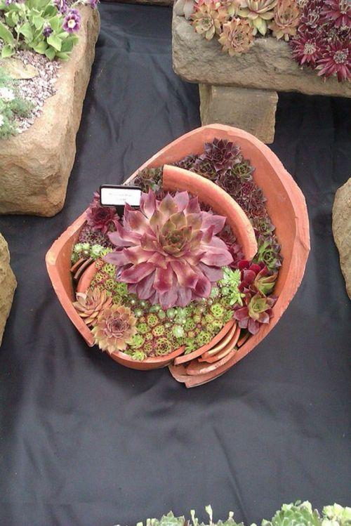 Minigarten Sukkulenten Grün Und Rot | Mecky | Pinterest ... Mini Garten Aus Sukkulenten Selber Machen