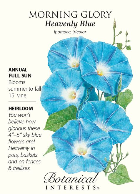 Heavenly Blue Morning Glory Seeds 2 5 Grams Morning Glory Seeds Blue Morning Glory Morning Glory Flowers