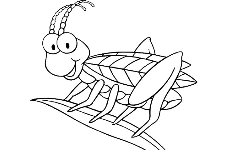 Top 17 Free Printable Insect Coloring Pages Online Bug Coloring Pages Coloring Pages Insect Coloring Pages