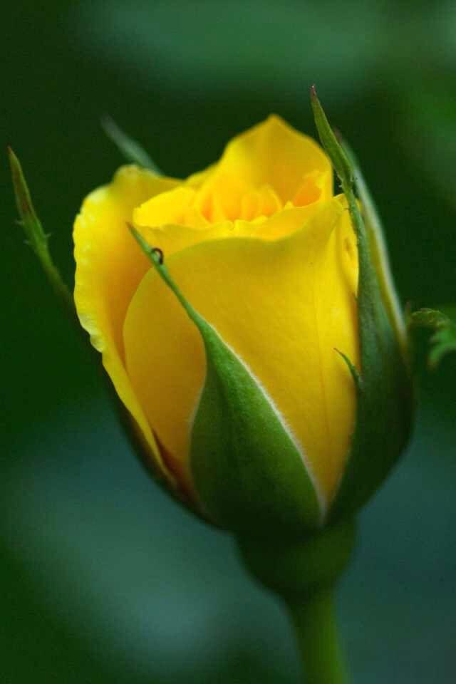 Poema do Amigo  ~ Toninho Bira ~
