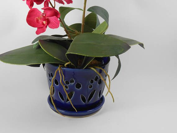 Royal Blue Orchid Pot Orchid Cache Pot Ceramic Orchid Pot By Tamarack Stoneware Orchid Pot Blue Orchids Orchids