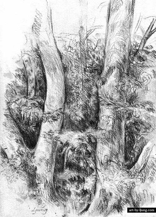 forest trees | etchings | Pinterest | Drawings ...
