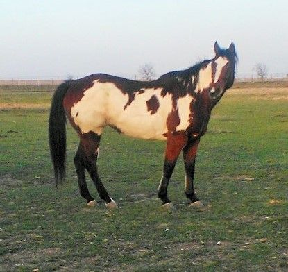 Rin (World Class Ladybug), our new horse.