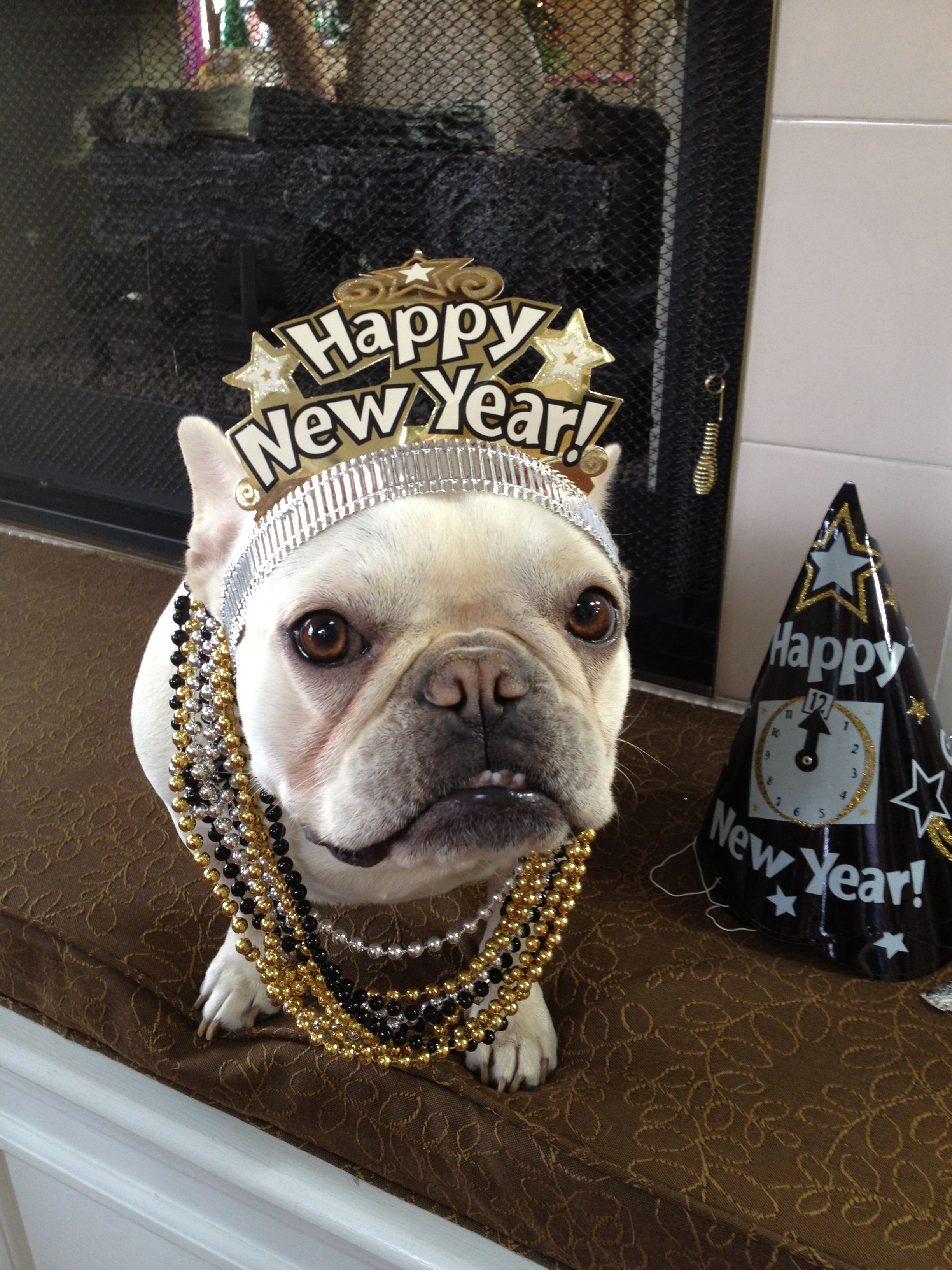 Happy New Year French Bulldog Bulldog Fur Babies