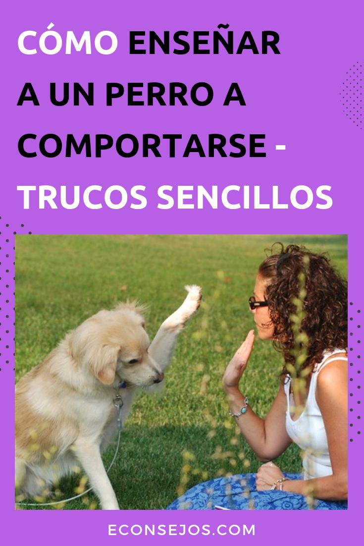 Photo of Conoce trucos sencillos para enseñar a un perro a comportarse