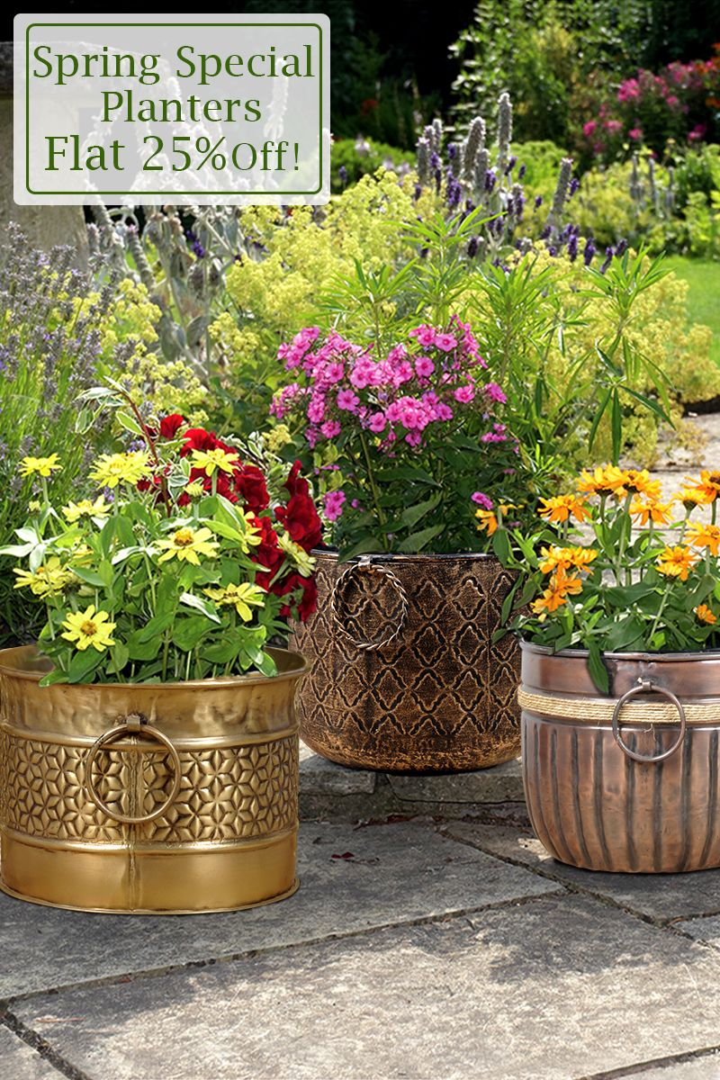 Lets The Spring Spreads The Charm Into Your Garden With Our